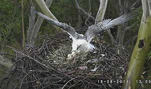Female and male on the nest