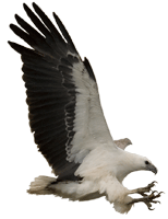 EagleCAM Logo
