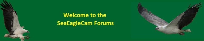 Sea-EagleCAM.org Forums