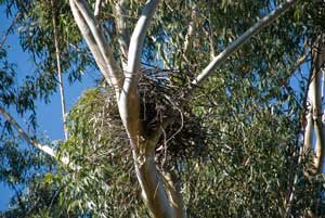 Nest 15 May 2012